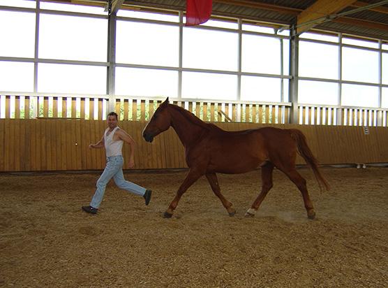 Horse_in_Harmony_Horsemanship_Trainer_3