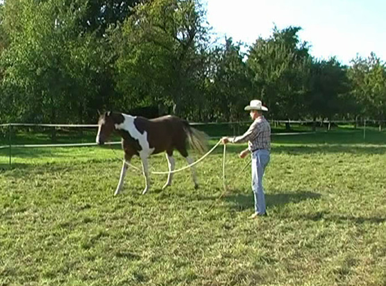 Horse_in_Harmony_Horsemanship_Trainer_BW