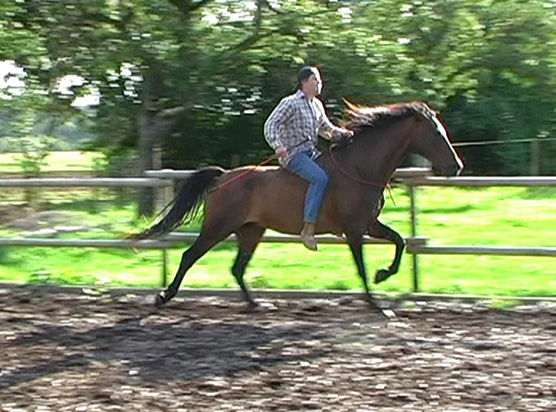 Horse_in_Harmony_Horsemanship_Trainer_BW_2