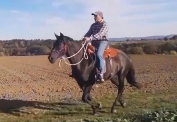 Horse_in_Harmony_Trainer_ausreiten