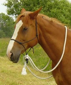 Horse-in-harmony-header-natural-horsemanship